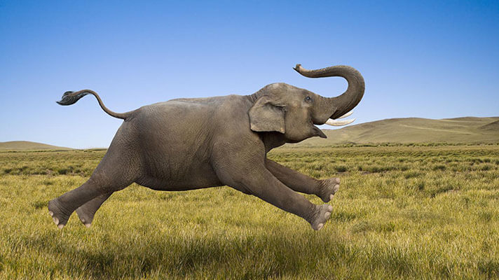صدای فیل