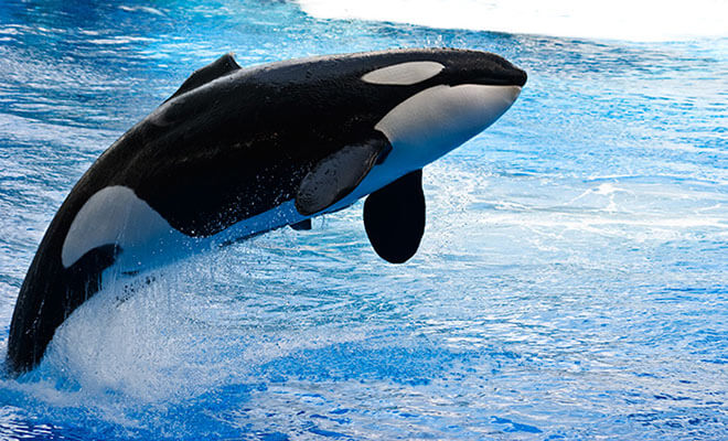دانلود صدای نهنگ