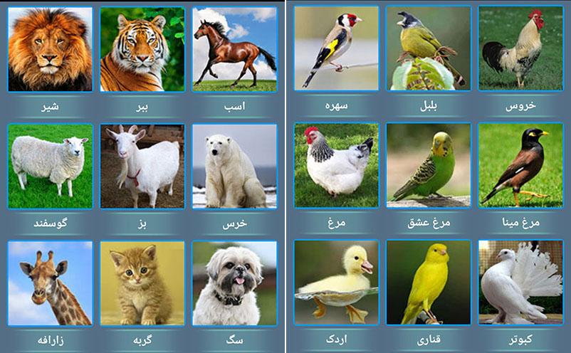 صدای-پرندگان-حیوانات